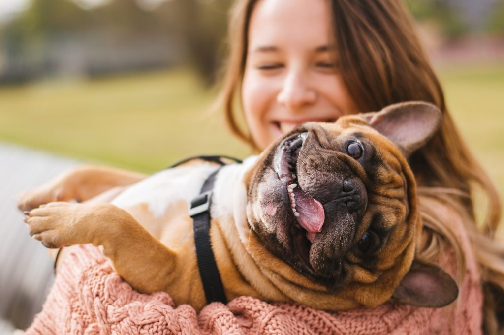 small bulldog happy due to generic anti anxiety medication
