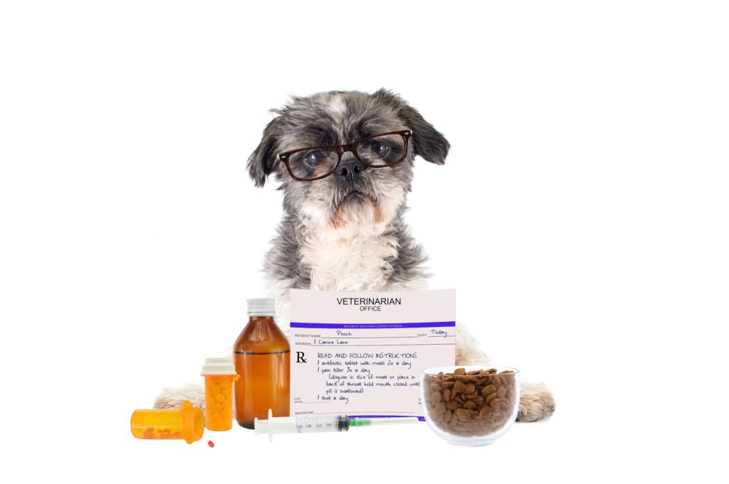 small dog with glasses posing with generic pet medications