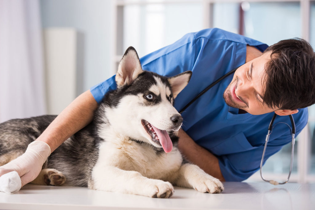 happy husky taking clomipramine hydrochloride tablets for depression anxiety